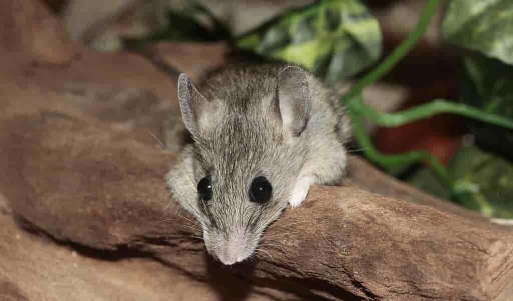 une-souris-vit-à-une-hauteur-de-6739-mètres
