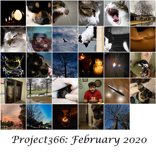 Project 366 February