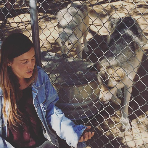 wildspiritwolfsanctuary ramahnewmexico candykitchennewmexico rescue sanctuary wolves fence handler woman