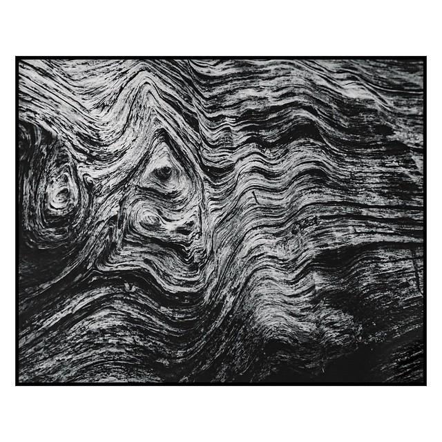 Sequoia Texture - 8x10 Silver Gelatin