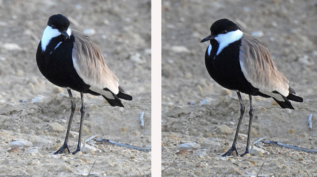 Birdwatch-07