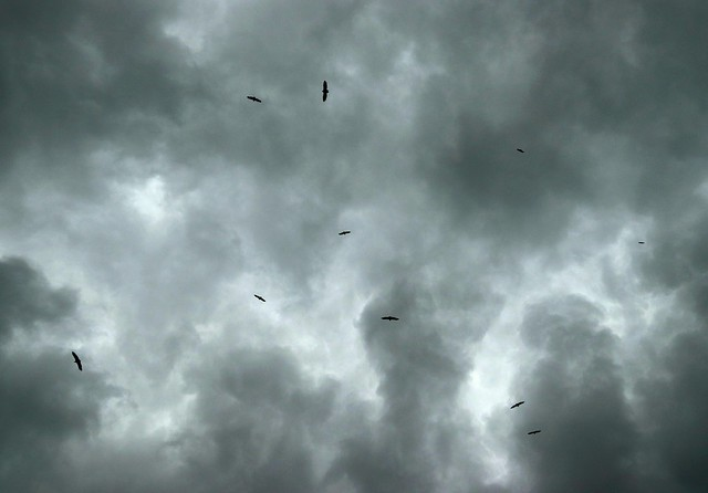 vultures on a cloudy day