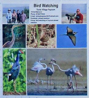 Birdwatch3-1