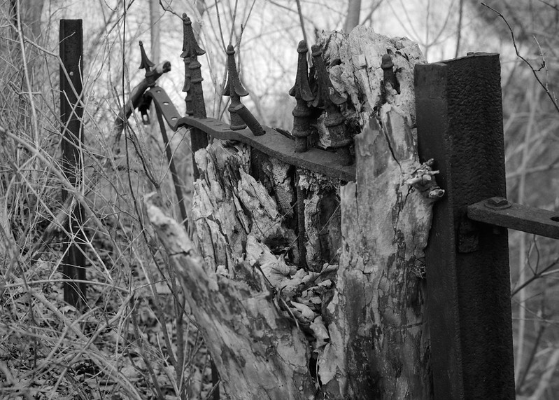 Iron Fence in Tree Trunk, Saratoga Spa State Park.