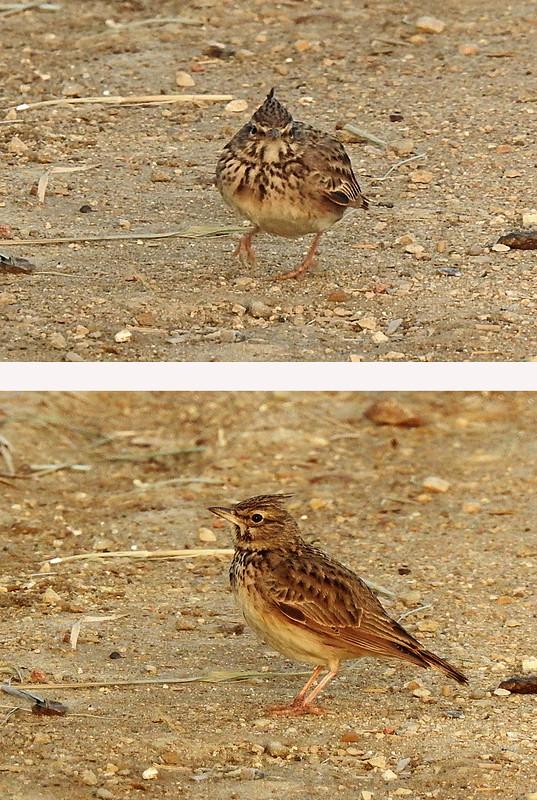 Birdwatch2-2