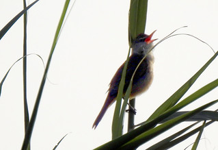 Birdwatch-22