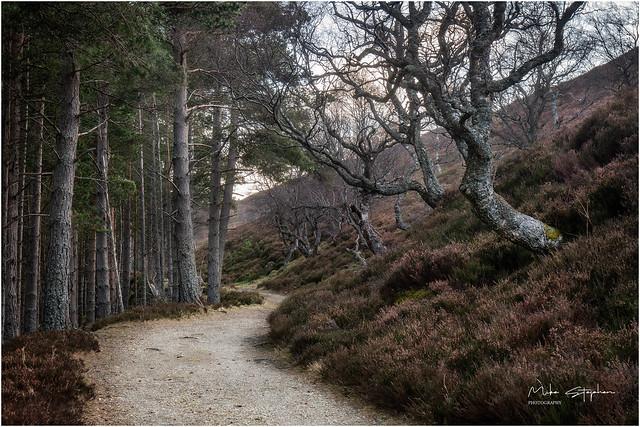 Queen's Drive Path