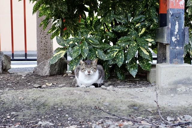 Today's Cat@2020ー03ー19
