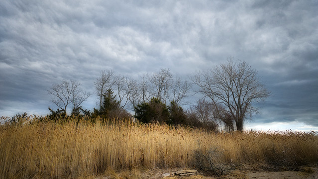 Wetlands Meadow with Winter Clouds