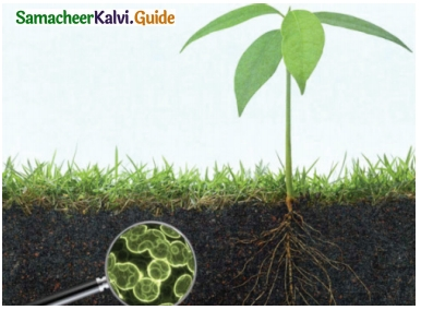 Samacheer Kalvi 6th Science Guide Term 3 Chapter 5 Plants in Daily Life 7