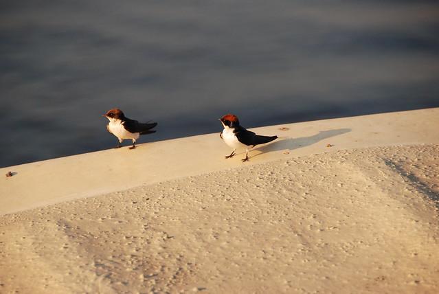Chobe-uccelli-06-passaggio-in-barca