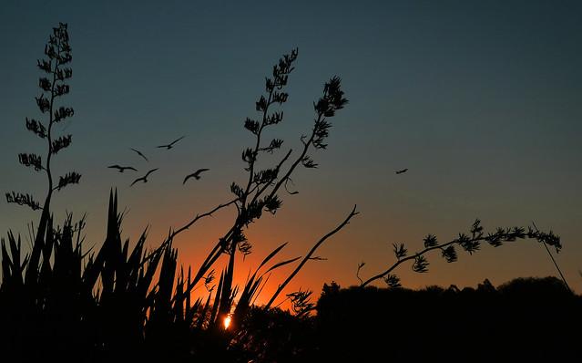 Sunset glow.