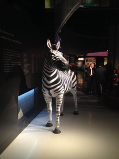 Zebra in the lower cafe at Museum of London