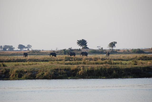 In barca sul Chobe-02
