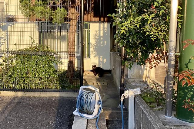 Today's Cat@2020ー03ー20
