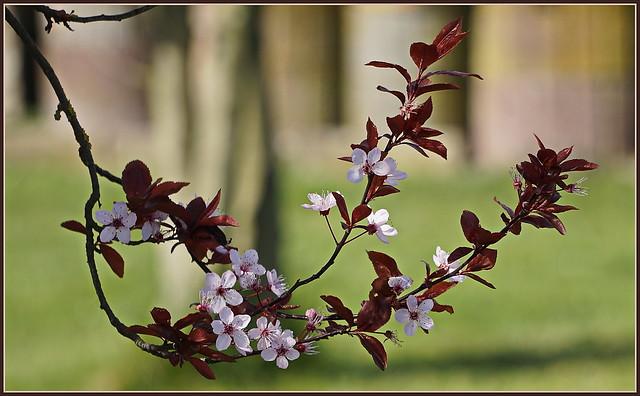 🌼🌸🌼🌸🌼 Ein kleiner Frühlingsgruß 🌼🌸🌼🌸🌼