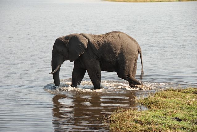Chobe_elefante_snorkeling-02