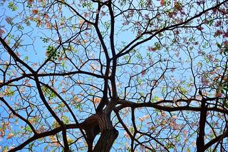 tree service portland or