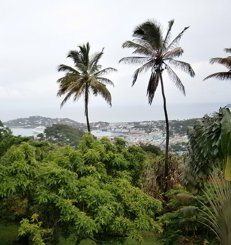 cruising cruise carnivalcruiseline caribbeancruising caribbeansea caribbeanisland palmtrees caribbeanlandscape castries stlucia stluciashoreexcursion stluciacruiseexcursion