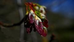 Le printemps est venu, mais non sans larmes, cette année.
