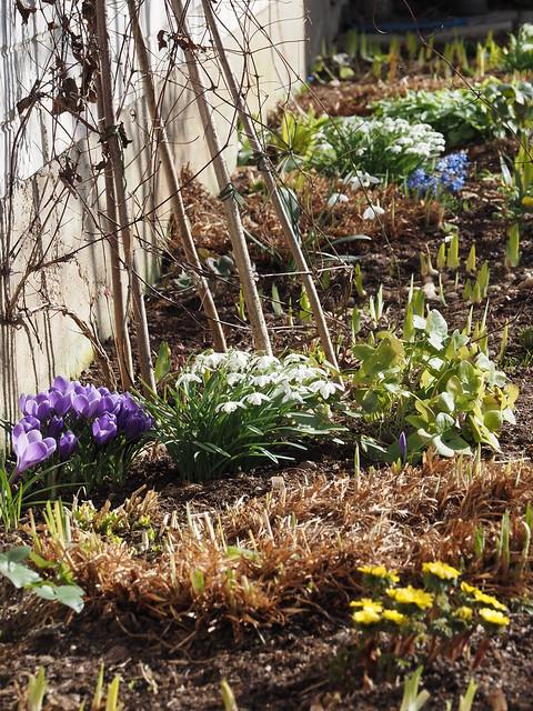 Garden Spring Border