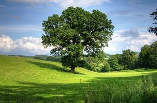 arborist vancouver wa