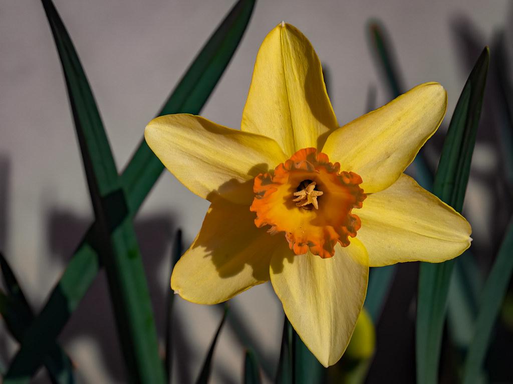 Au coeur du printemps... 49680100076_8a47081ece_b