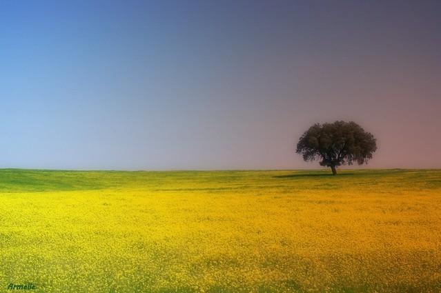 Minimalisme rural !