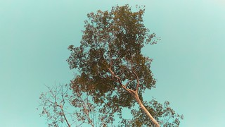 commercial tree services vancouver
