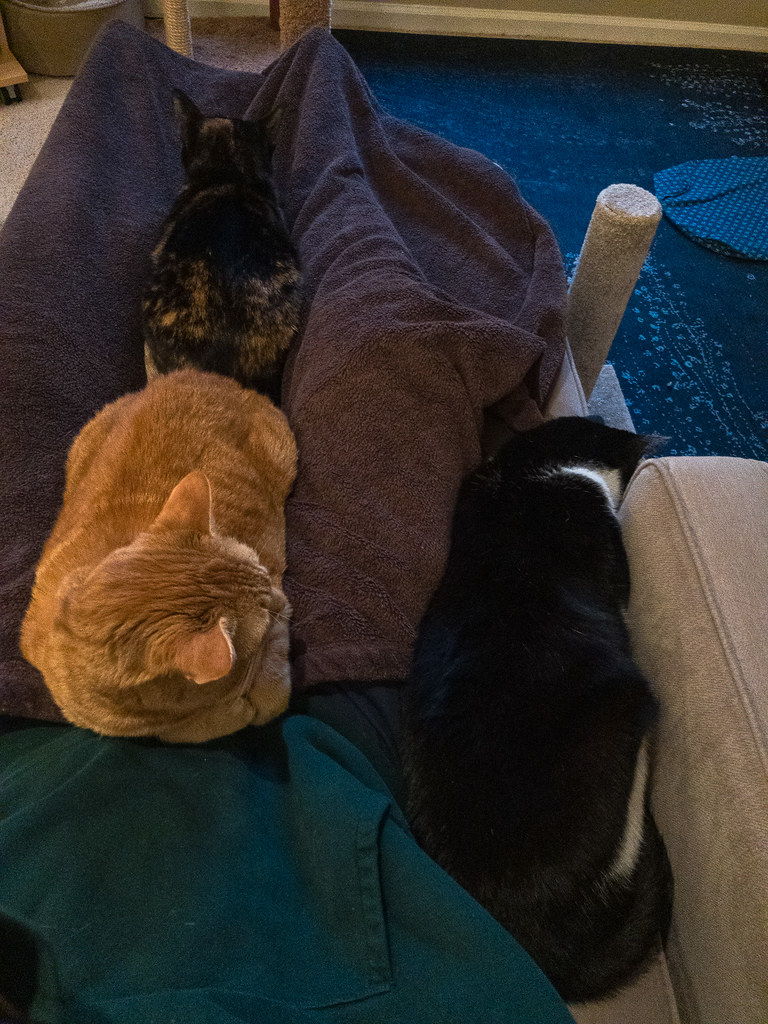 Our cats Sam and Trixie sleep on me while our cat Boo wedges himself into the gap between me and the end of the couch in March 2020