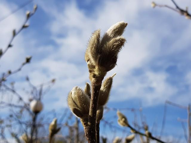 März 2020 im Oberschwäbischen Hausgarten :-:  March 2020 in the Upper Swabian garden :-: Mars 2020 dans le jardin de la Haute Souabe