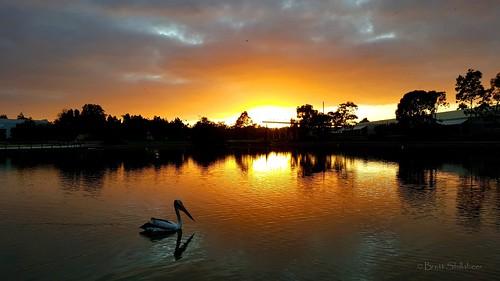 sunrise pelican lake southaustralia