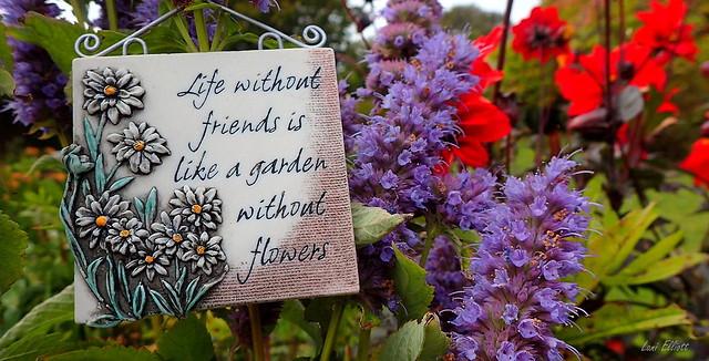 My Vibrant Garden.....Smile on Saturday !