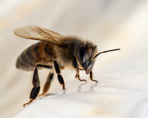 First Bee