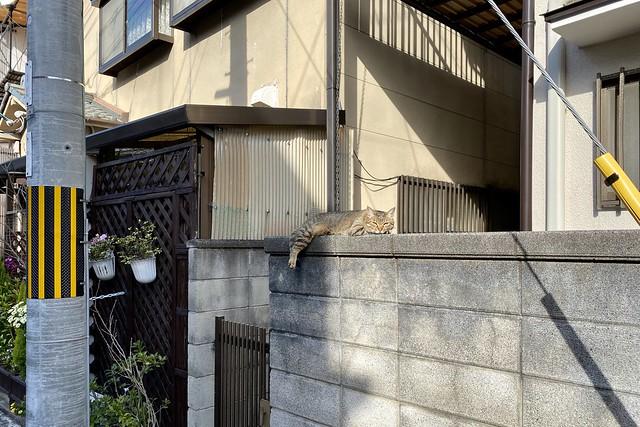 Today's Cat@2020ー03ー21