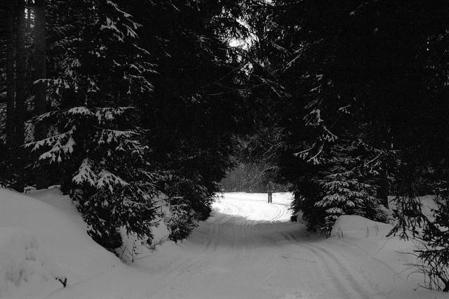 W ciemnym lesie / In the dark forest