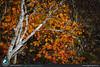 I bellissimi colori autunnali nel parco di Skaftafell