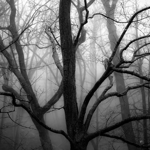 d5000 dof fortsheridanforestpreserve nikon abstract blackwhite blackandwhite blur branches bw depthoffield dreamlike dreamy fog foggy forest landscape mist misty monochrome natural noahbw quiet square still stillness treetrunk trees winter woods