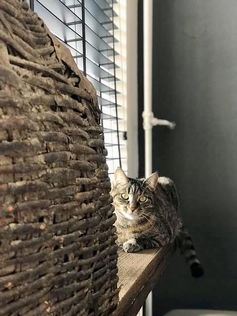 Poes Sjors op vensterbank met leemmand