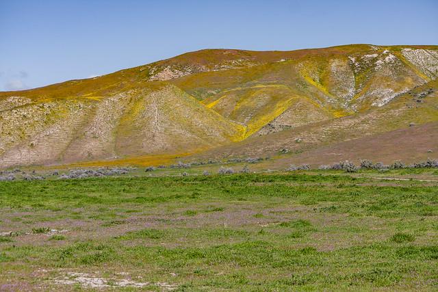 Carrizo Plain 2010 33