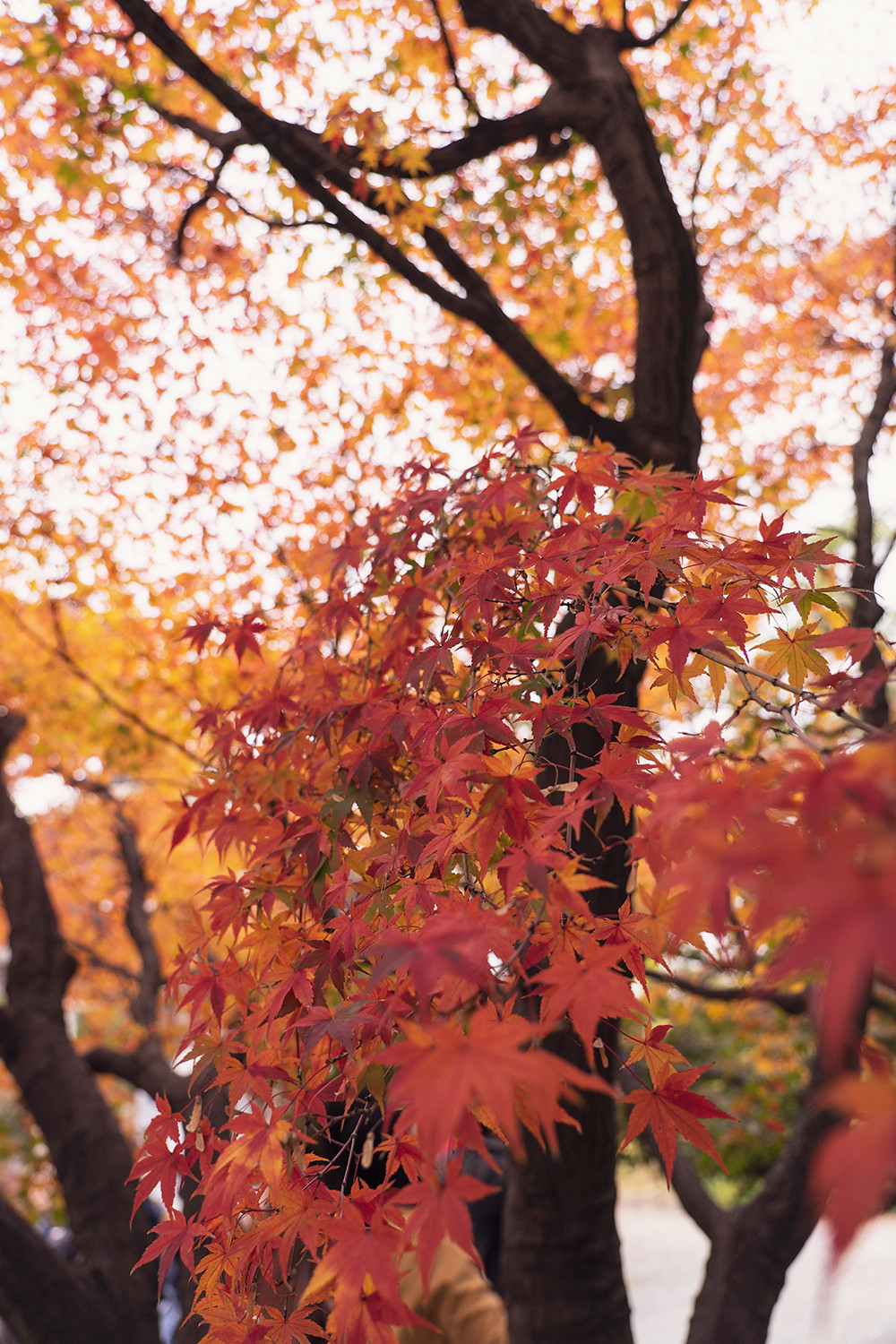 09osaka-castle-fall-leaves-japan-travel