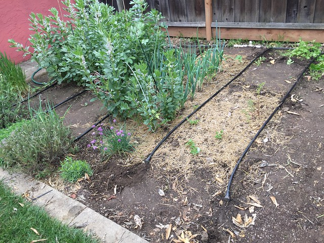 Irrigation initiated