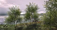 The Little Branch: Crabapple Tree @MANCAVE