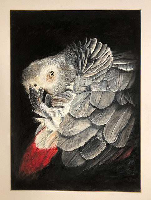 Grey Parrot - Painting