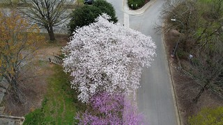 Blossoms from above/Raleigh | by base10