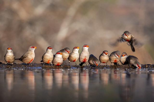 Birds - Zimanga - South-Africa