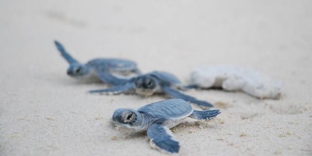 Phượt Hot - Phượt Côn Đảo xem rùa đẻ trứng (24)