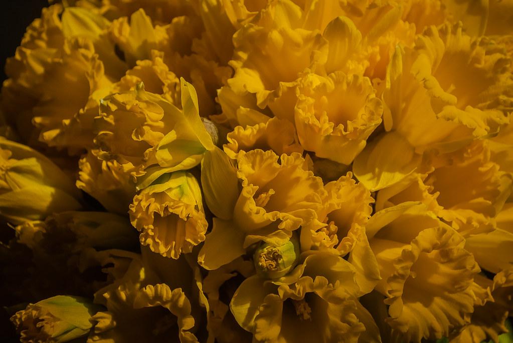 Warm flowers 17:10:54 DSC_4745
