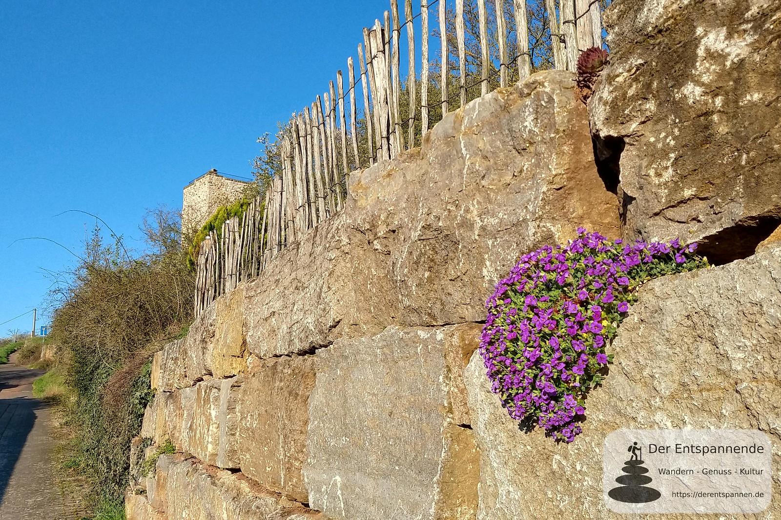 Polsterplox und der Bergfried Burgruine Schwabsburg