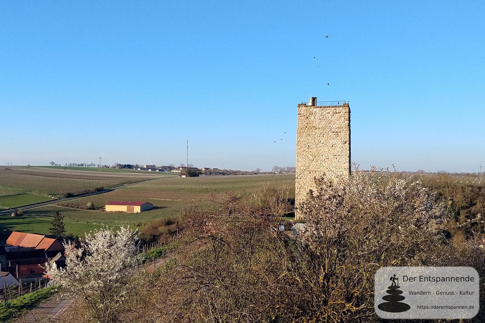 Reich der Dohlen und Turmfalken - Bergfried Burgruine Schwabsburg